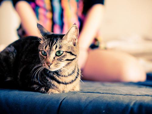 ねこをもふりたい!ananの猫特集を見てネコのかわいさを考えた件